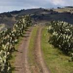 153-Paesaggi-Vizzini-12-03-2009-1024x680_mini