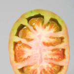 Pomodoro-6-1024x680_mini